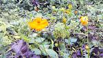 20090812flower2.jpg