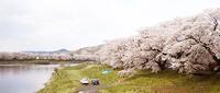 20100424sakura.jpg