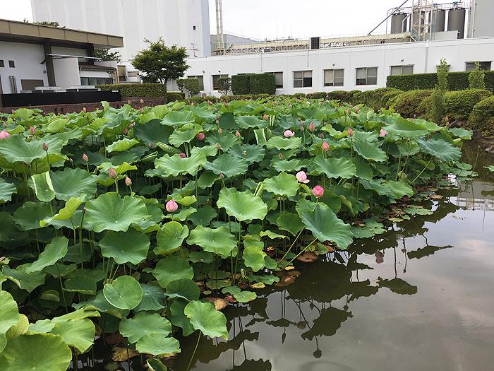 http://hiromu-saeki.com/blog/item/20170715natori02.JPG